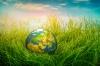 Earth in grass